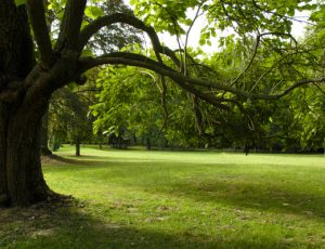 parc web
