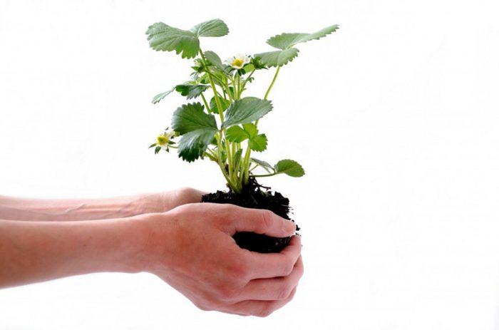 plant-164500-1280-2