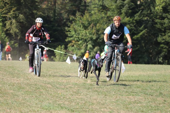 puce canicross cross chien course