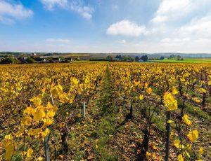 Vignoble de Reuilly