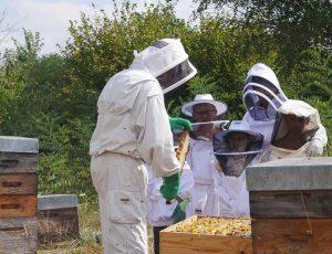 safari abeille