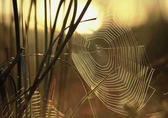 stage araignées