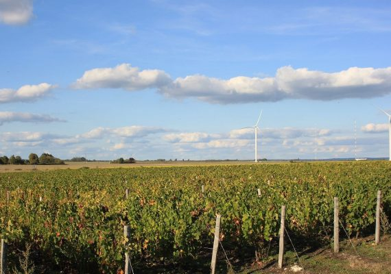 vignes-01_edited
