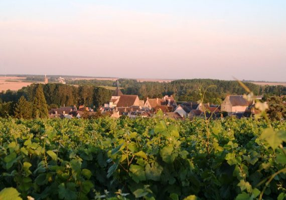 Vignoble Reuilly
